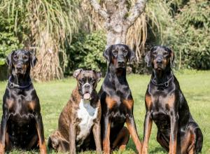 Doggyschool Passau