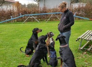 Doggyschool