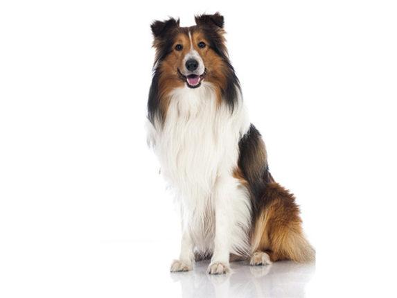 Erwachsene Hunde Hundeschule Passau Aktuelles Aus Der Doggyschool